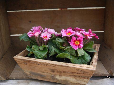 חנויות פרחים ראשון לציון